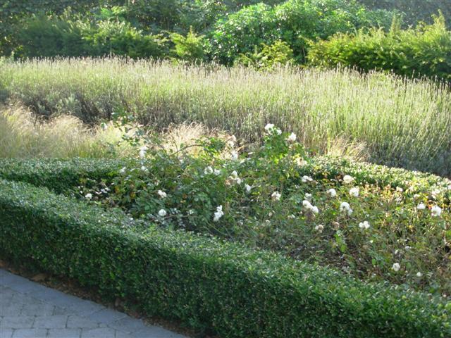 Veerle van tuyne strakke tuinen for Strakke tuinen met siergrassen